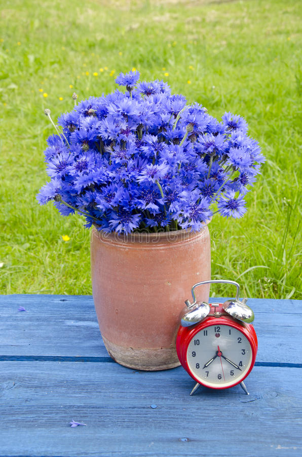Vintage clay vase with cornflowers and red alarm clock on table. Vintage clay ceramic vase with cornflowers and red alarm clock on garden table stock photography