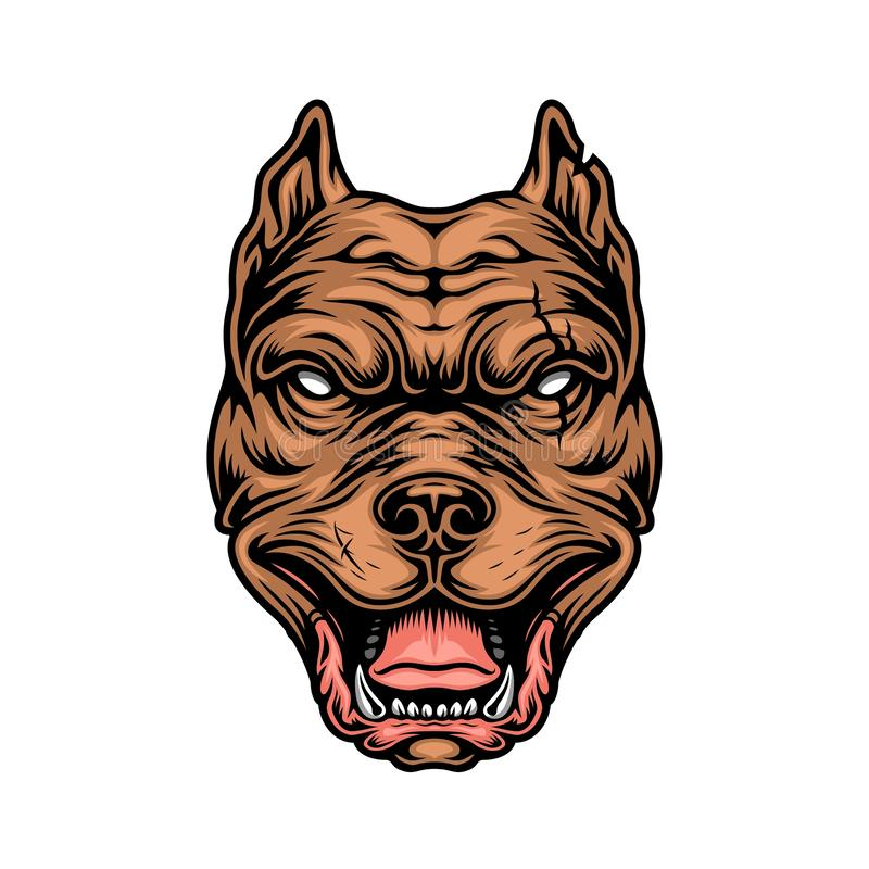 Vintage colorful cruel pitbull head. On white background isolated vector illustration royalty free illustration