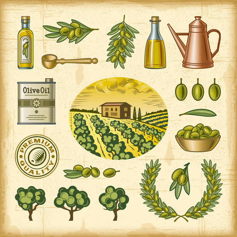 Vintage colorful olive harvest set royalty free illustration