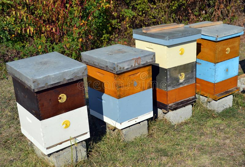 Wooden Beehives on a meadow stock photo