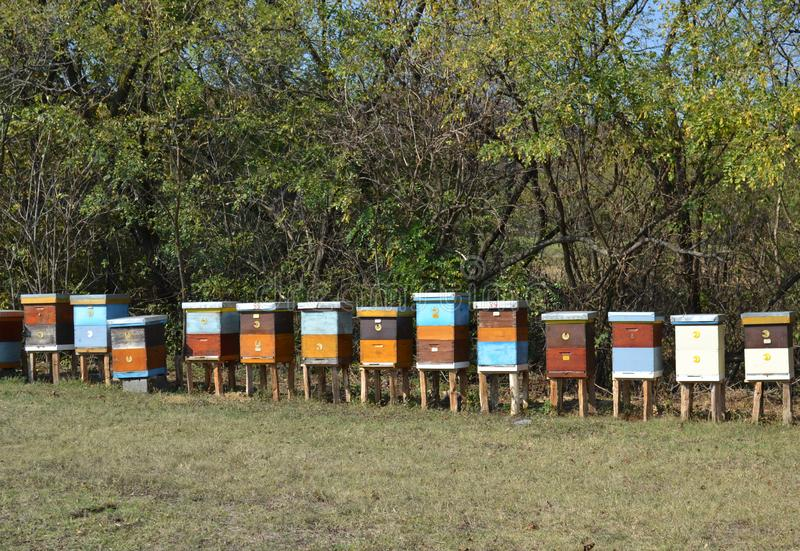 Wooden Beehives on a meadow royalty free stock photos