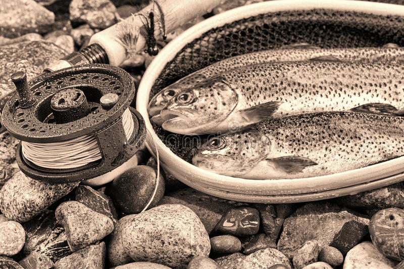 Vintage concept of Fly Reel and pole with trout in net. Vintage concept of fly reel, focus on front of reel, with trout, landing net and rocks in background stock images