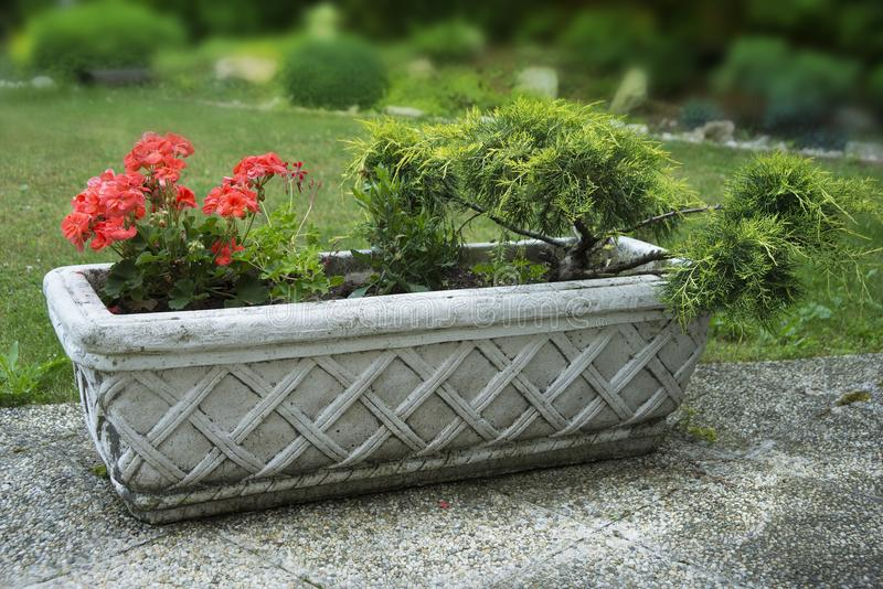 Vintage concrete flower pot outside on the porch.  stock photography
