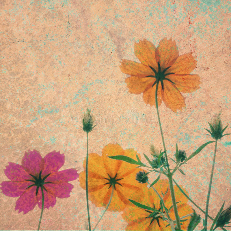 Vintage Cosmos Flower On Cement Textured Background Stock ...