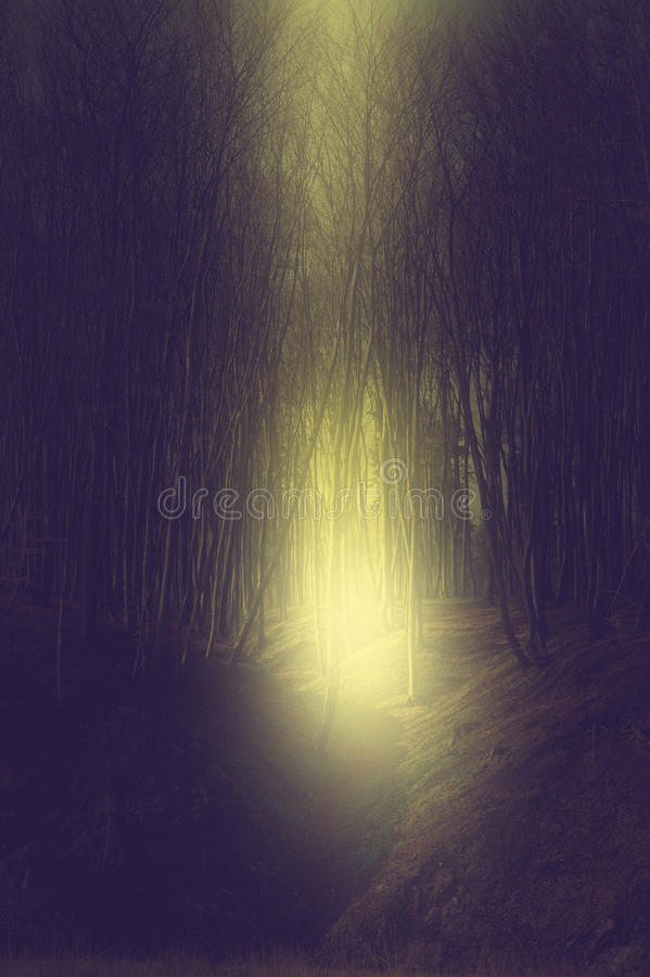 Vintage dark scary forest royalty free stock photos