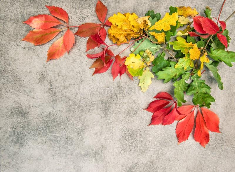 Vintage de fond de feuilles d'automne d'érable de chêne modifié la tonalité images stock