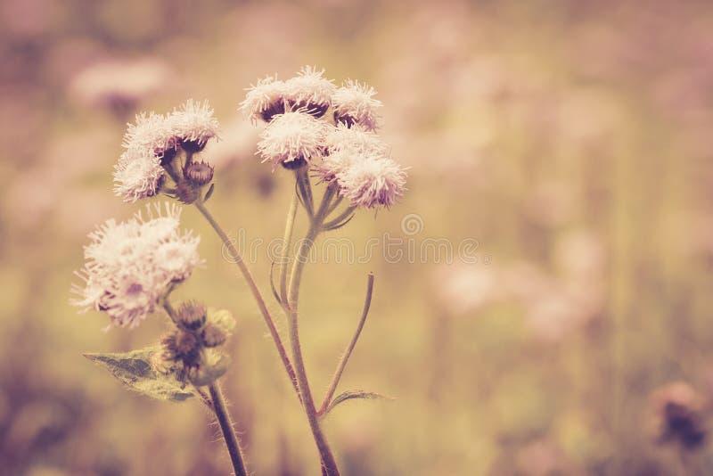 Vintage do prado da flor retro fotos de stock royalty free