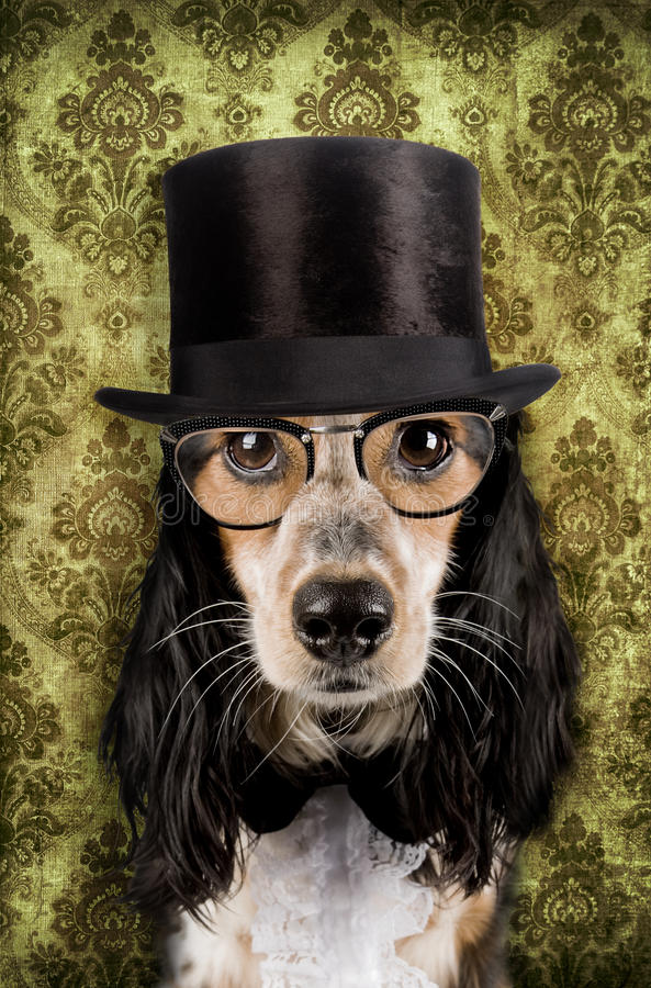 Download Vintage dog stock photo. Image of clever, animal, humor - 21064042