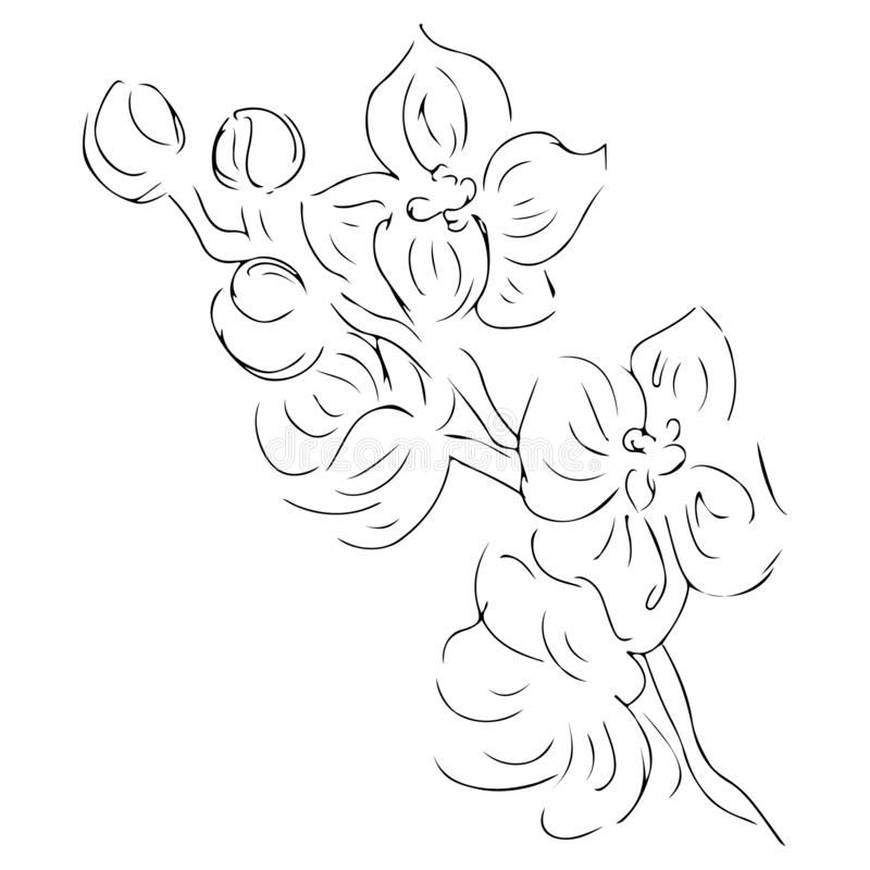 Vintage doodle illustration with black orchid on white background. Line art. Graphic, sketch drawing. Hand drawn botanical. Illustration. Vector orchid. Vector royalty free illustration