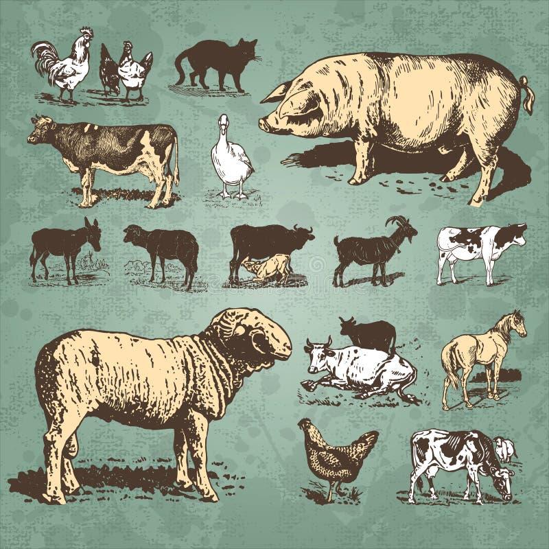 Vintage dos animais de exploração agrícola ajustado () ilustração royalty free
