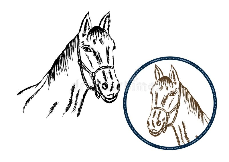 Vintage drawing horse vector. Black and brown colors. Hand drawn horse head vector illustration. Vintage drawing horse. Black and brown colors vector illustration