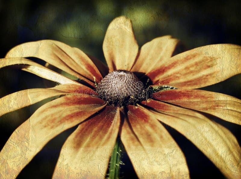 Download Foto Do Vintage De Um Close Up Da Flor Foto de Stock - Imagem de photocopy, quadro: 29846340