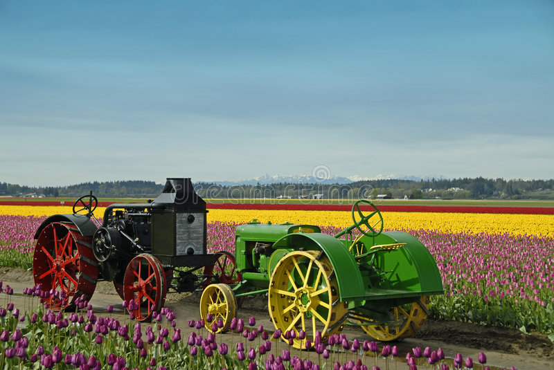 Vintage Farm Tractors. Two old farm tractors, one powered by steam the other by gas stock photo