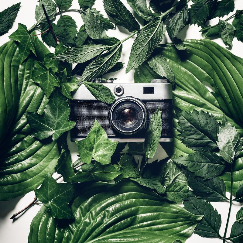 Vintage film camera in green leaves, top view. Retro technology creative concept stock images