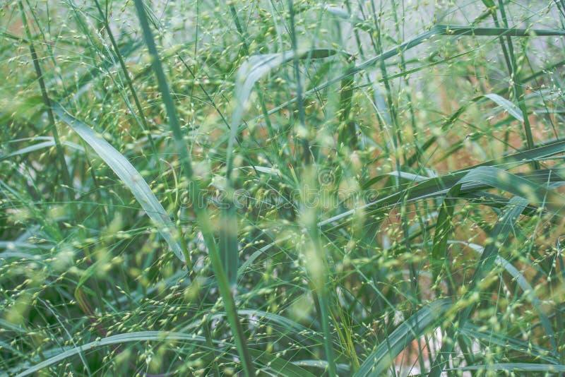 Vintage filter. Green grass macro stock photos