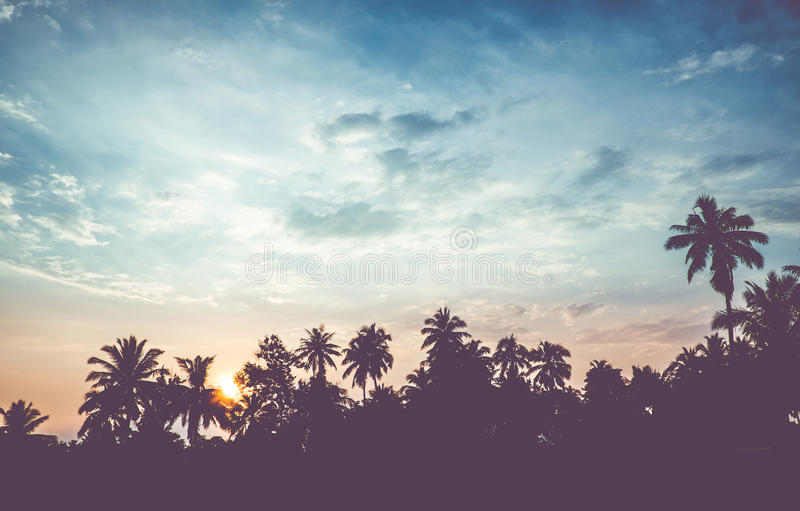 Vintage filter : silhouette landscape of coconut tree ,tropical stock photos