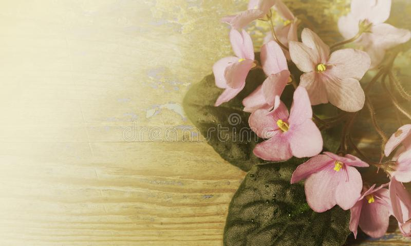 Vintage floral background. Bouquet of pink violet flowers on an old wooden board. Misty sunny morning. stock images
