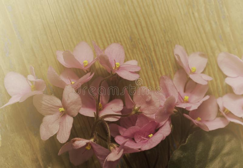 Vintage floral background. Bouquet of pink violet flowers on an old wooden board. Misty sunny morning. royalty free stock photography