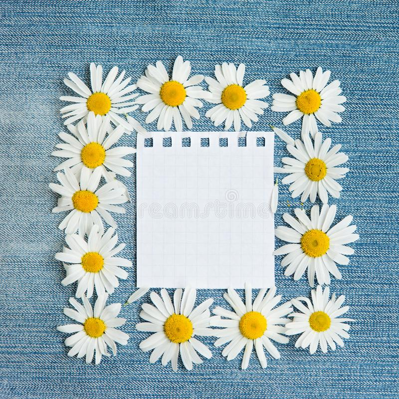 Vintage Floral background with chamomile flowers royalty free stock image
