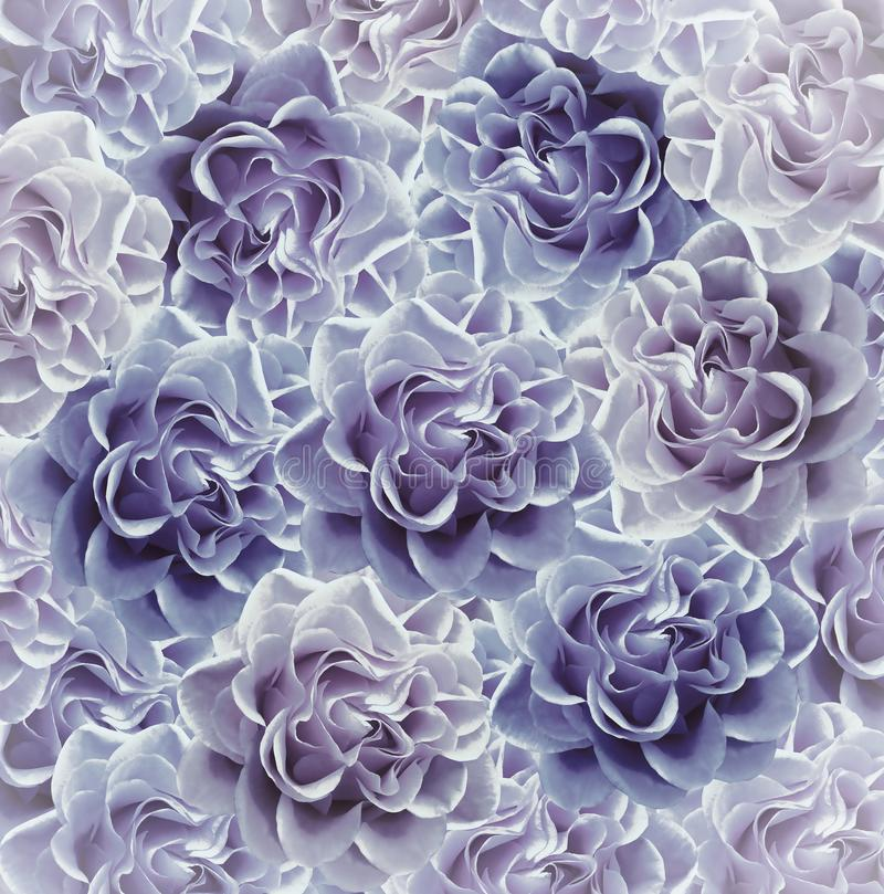 Vintage floral blue-violet beautiful background. Flower composition. Bouquet of flowers from blue-purple roses. Close-up. royalty free stock photo
