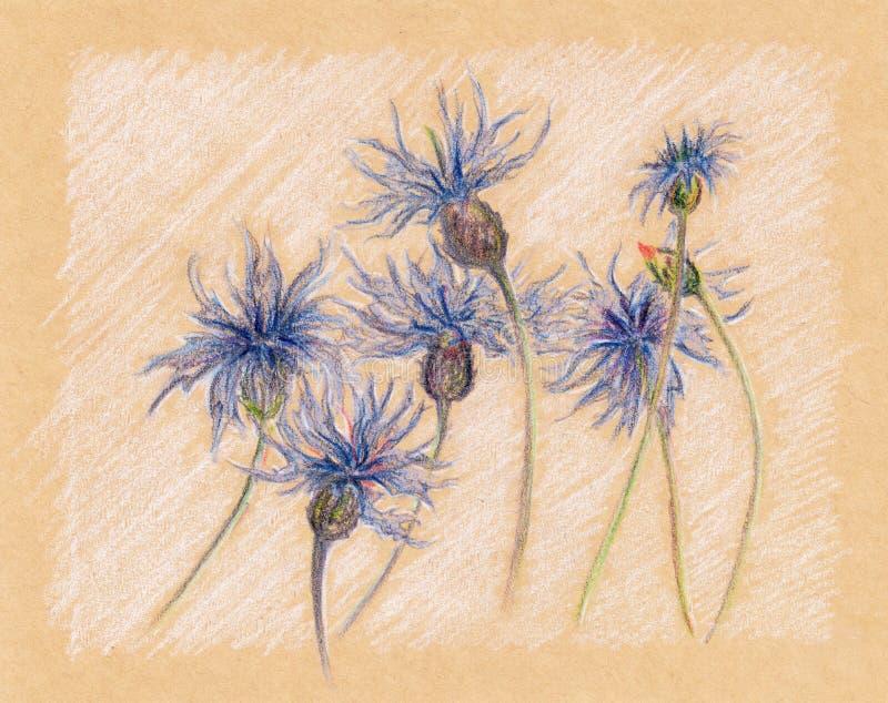Vintage floral de croquis de métier de bleuets bleus rétro illustration stock