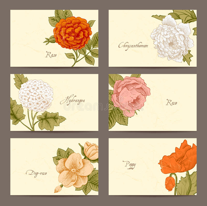 Vintage floral horizontal business cards stock vector illustration download vintage floral horizontal business cards stock vector illustration of dull composition 38582827 reheart Choice Image
