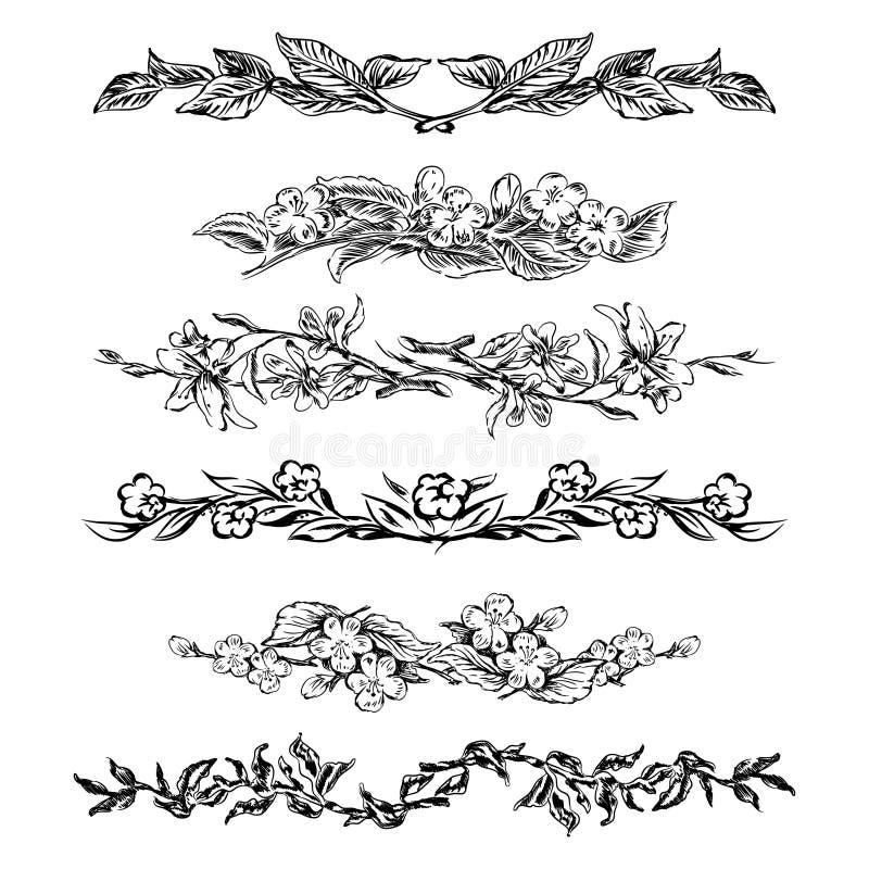 Vintage floral page dividers stock vector illustration for Classic border design