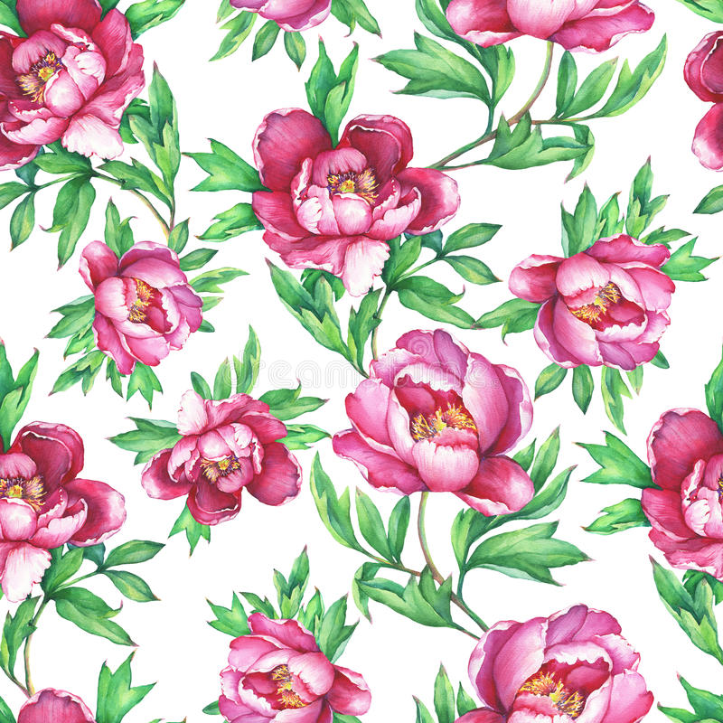 Vintage floral seamless pattern with flowering pink peonies, on white background. Elegance watercolor hand drawn painting illustra stock illustration