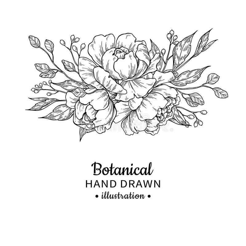 Vintage flower bouquet. Vector drawing. Peony, rose, leaves and. Berry sketch. Engraved botanical composition. Hand drawn floral wedding invitation, label royalty free illustration