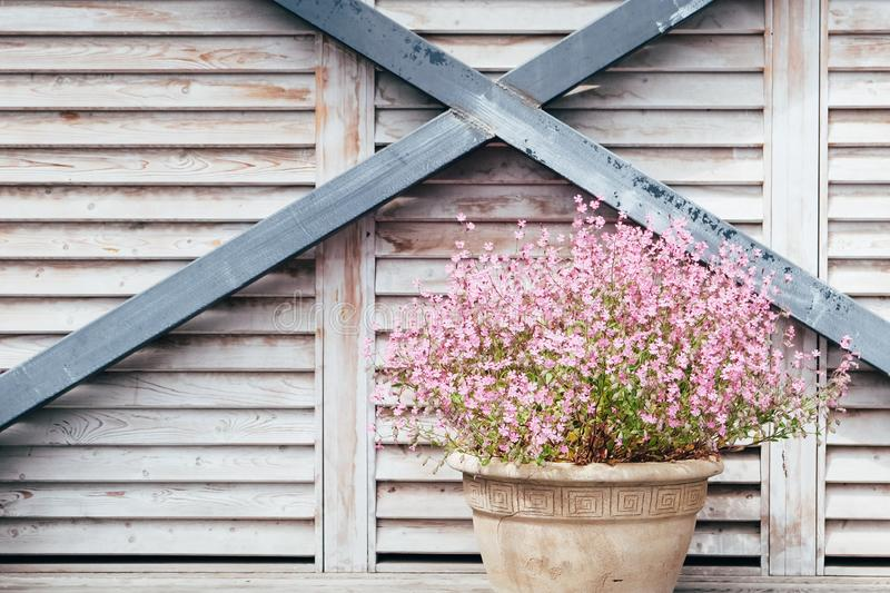 Vintage flower pot with beautiful pink flowers on wooden background stock photography
