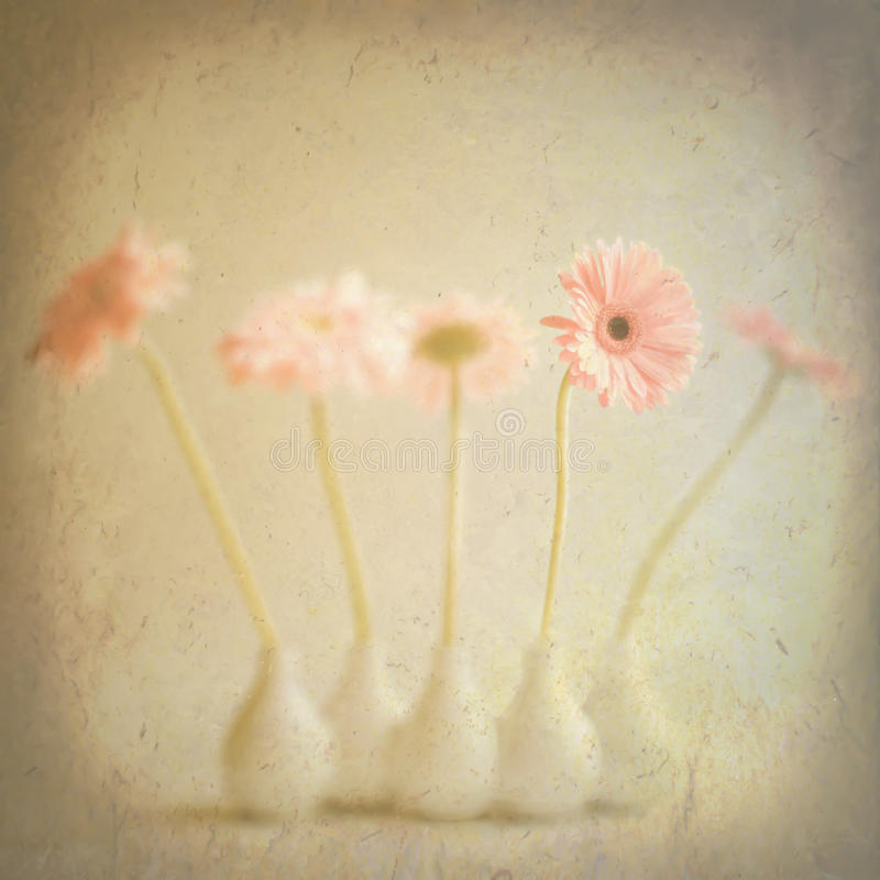 Vintage flowers. Some beautiful and colourful Vintage flowers royalty free stock photo