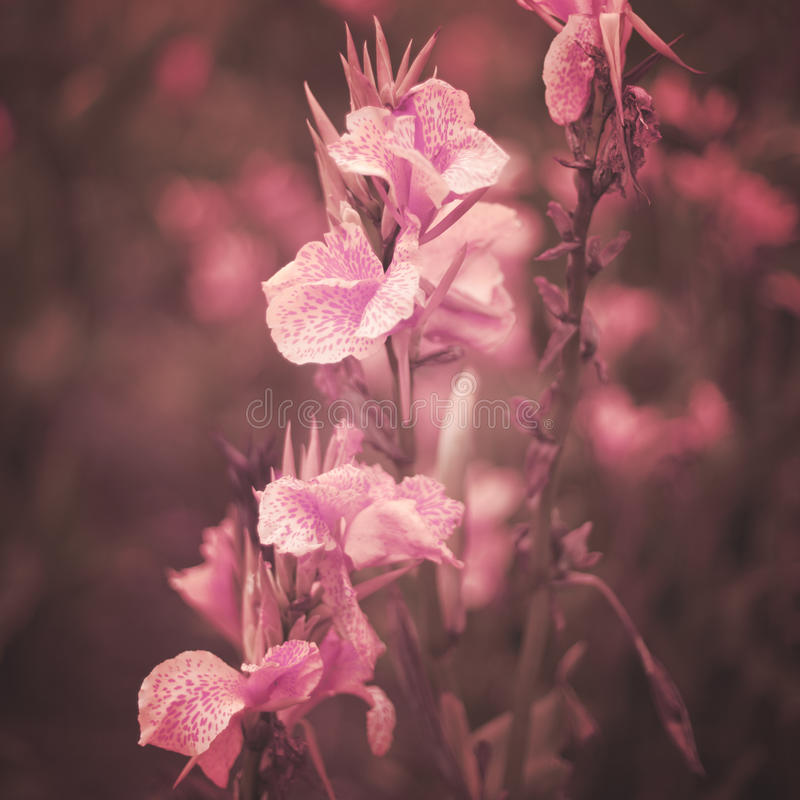 Vintage Flowers. Beautiful and soft Vintage Pink Flowers royalty free stock photography
