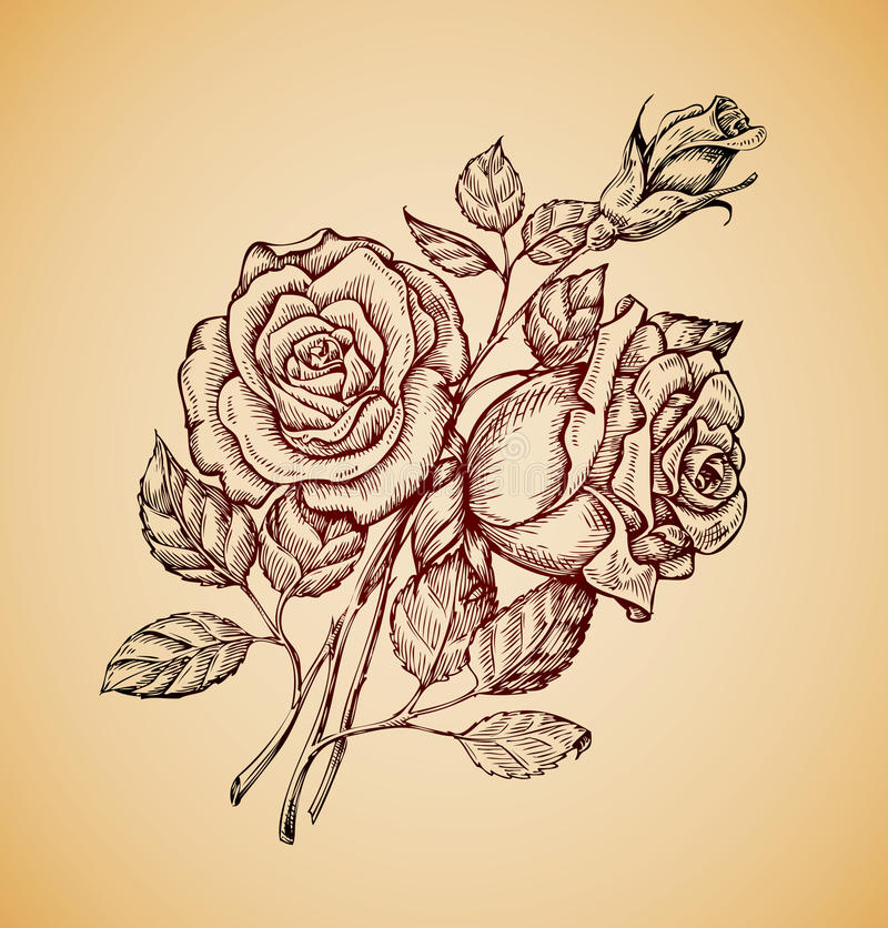 Vintage flowers. Hand drawn retro sketch flower rose. Vector illustration vector illustration
