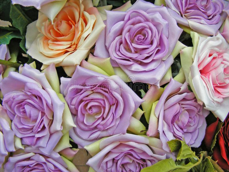Vintage flowers / purple violet handmade roses close up royalty free stock photos