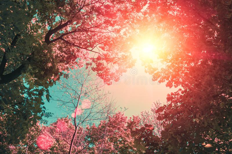 Frame of tree tops in sunlight. Vintage frame of tree crowns in a park on a clear sunny day. frame of tree tops in sunlight stock photography
