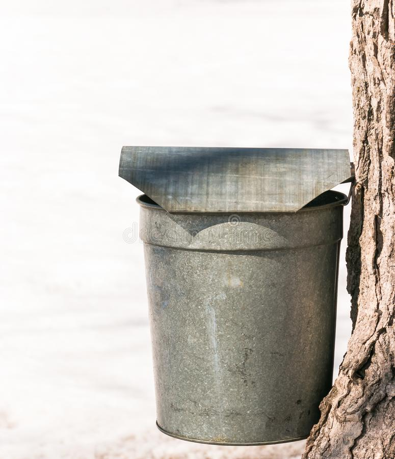 Vintage Galvanized Maple Syrup or Sap Bucket on Tree. Vertical with Clean Snow Background royalty free stock photography