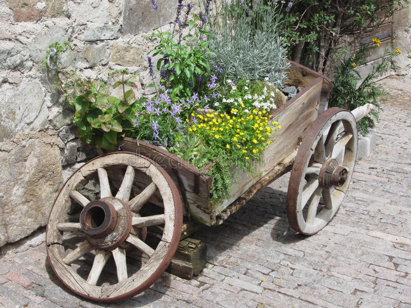 Vintage garden barrow with wild flowers and herbs . Fie allo Sciliar, South Tyrol, Italy.  royalty free stock image