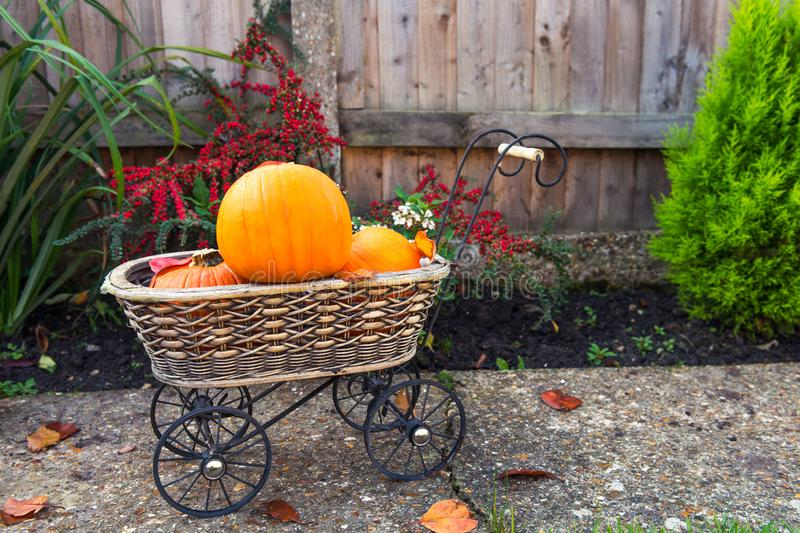 Vintage Garden basket with small pumpkins. Autumn harvest, thanksgiving, halloween concept. healthy diet food. Selective focus. Co royalty free stock photography