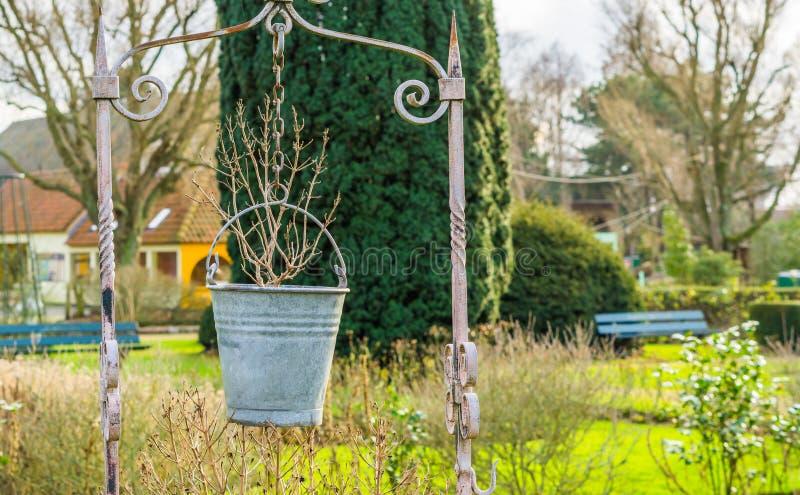 Vintage garden decoration, a metal bucket as flowerpot, outdoor park, nature scenery background. A Vintage garden decoration, a metal bucket as flowerpot stock photo