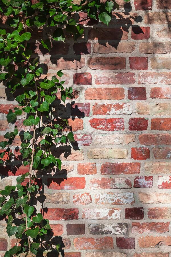 Vintage Garden Wall Detail Stock Photo Image Of Germany 177651598