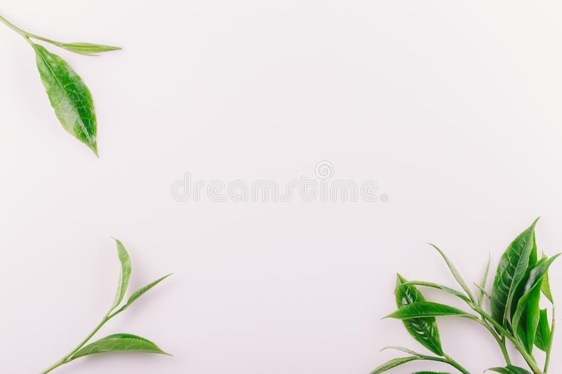 vintage Green tea leaf isolated on white background royalty free stock photography