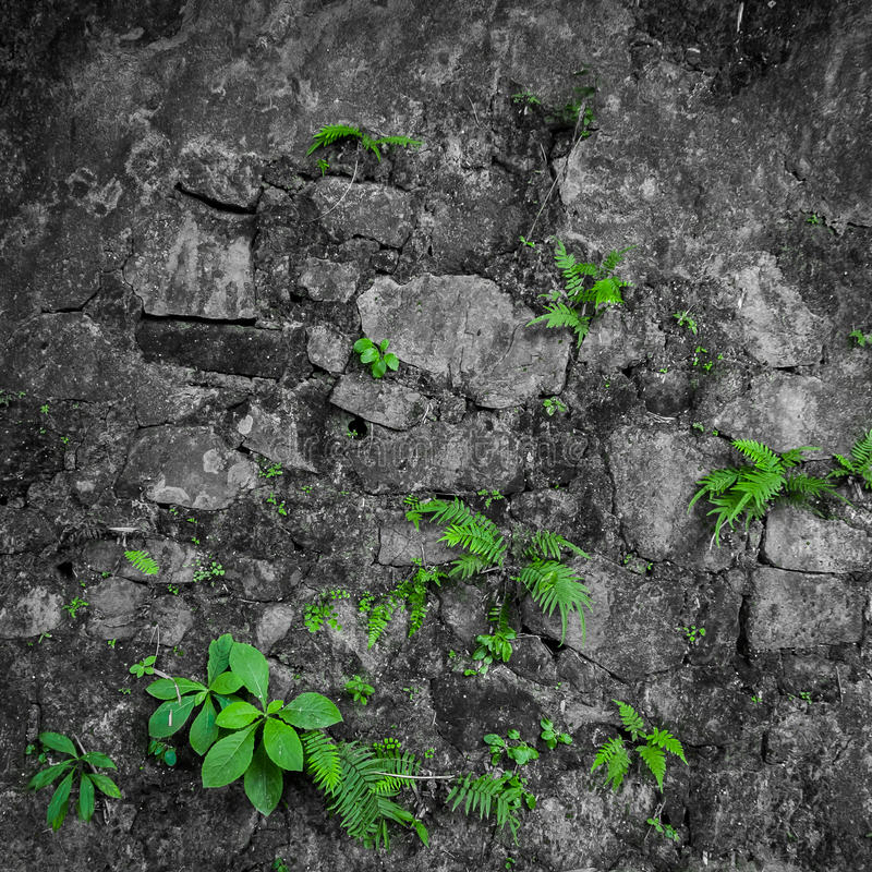 Vintage grunge brick wall. With green plants stock photo