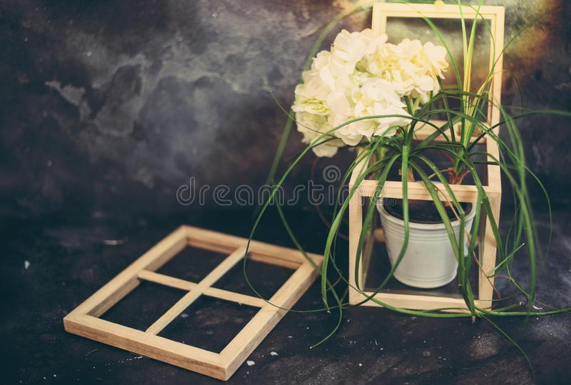 Vintage home decor houseplants and old wood and glass box and frames, cozy interior accessory stock image
