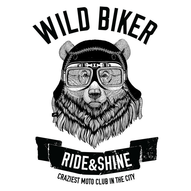 Vintage images of Grizzly bear for t-shirt design for motorcycle, bike, motorbike, scooter club, aero club royalty free illustration