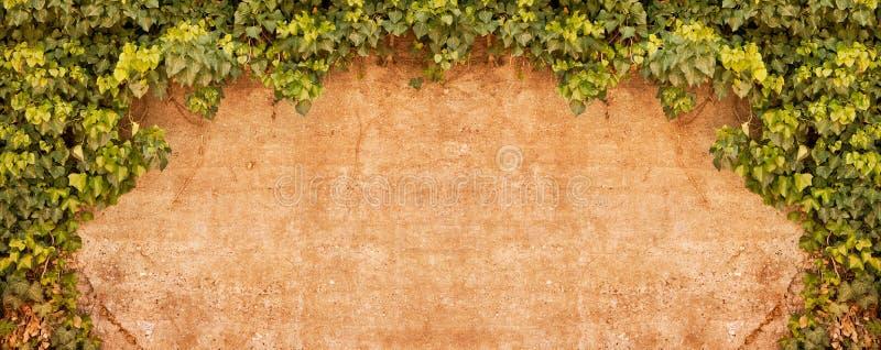 Download Vintage Ivy wall stock image. Image of plant, mottled - 11069979
