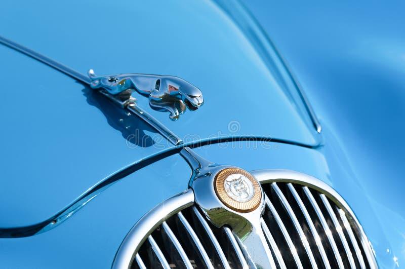 Vintage Jaguar com o distintivo do veículo fechado fotos de stock royalty free