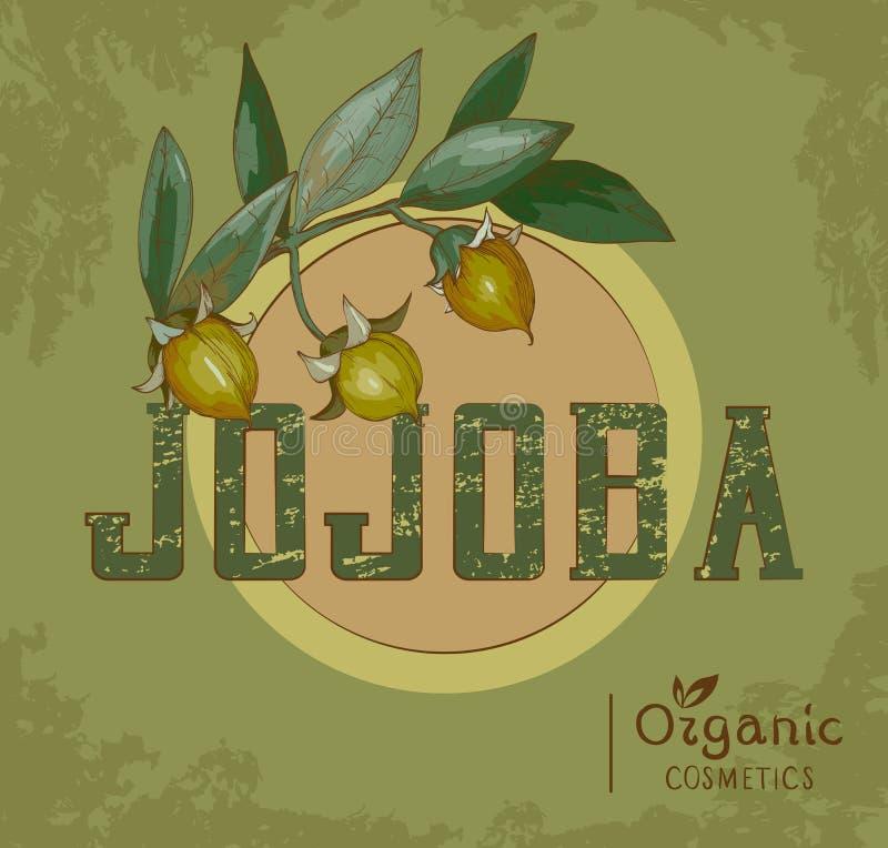 Vintage Jojoba plant Design for organic cosmetics vector illustration