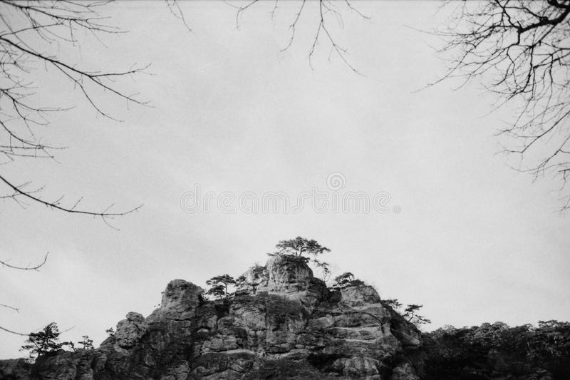 Vintage landscape in the woods on film. Atmospheric scanned analog photography with grain stock photo