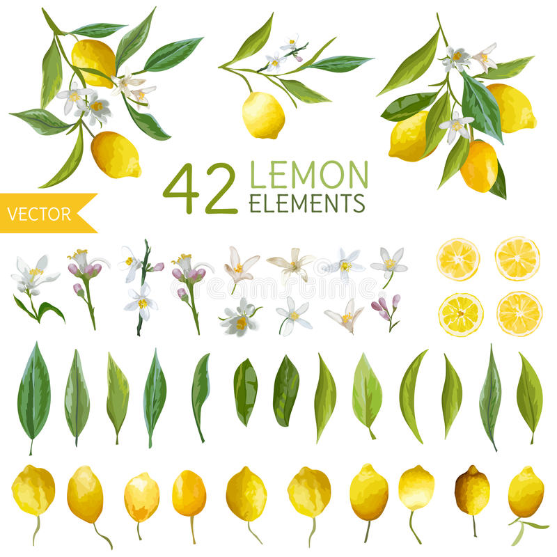 Vintage Lemons, Flowers and Leaves. Lemon Bouquetes vector illustration
