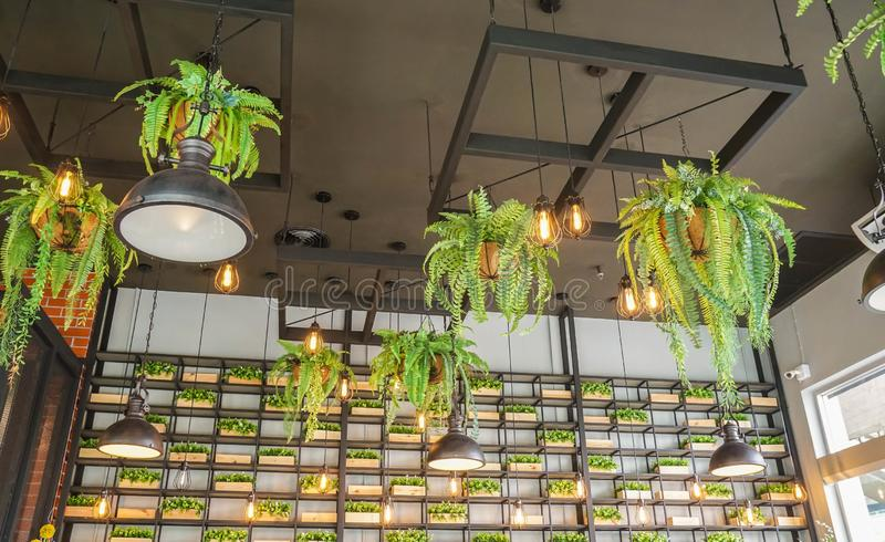 Vintage light bulb interior with hanging fern pot in cafe for decoration. Vintage light bulb interior with hanging fern pot in cafe ceiling for decoration royalty free stock images